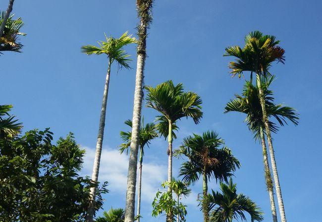 呀諾達熱帯雨林