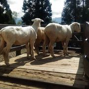羊のいる牧場