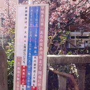 日本一早咲きの熱海桜