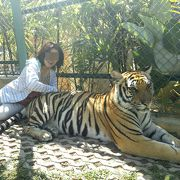 猫科動物大好きです!