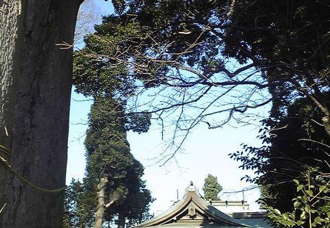 寒川神社の本殿を移築した木々が生い茂る神社