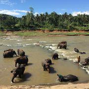 たくさんの象が水浴びしてます!お勧めです!