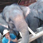 象は賢い!