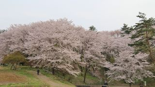 野土山 (桜の里)