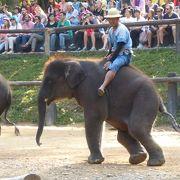 象のテーマパークです。