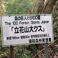 写真:立花山クスノキ原生林