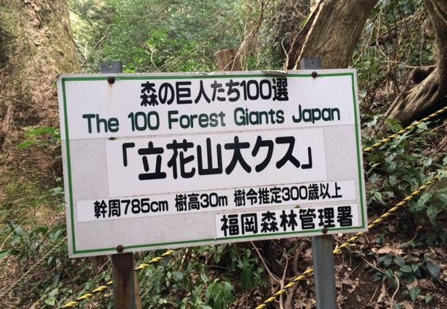立花山クスノキ原生林