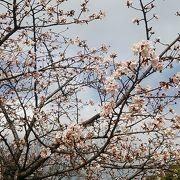 梅も桜も♪