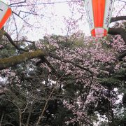 3月19日からの桜まつりの準備が整っていました