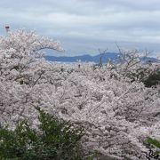 桜が満開の時に花を見ることが出来ました。