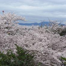 九州や海が見えます