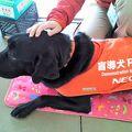 写真:盲導犬の里 富士ハーネス