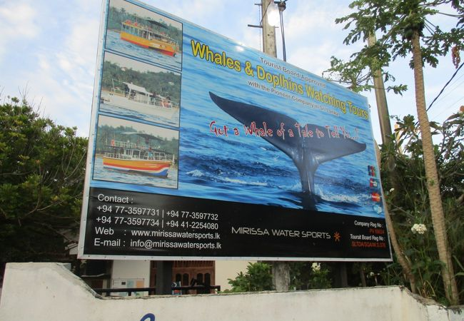 Mirissa Water Sports