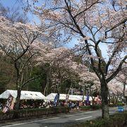 2016 御殿場桜まつり