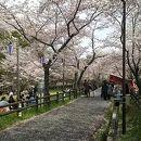 桜淵公園さくらまつり