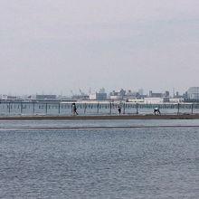三番瀬で、潮干狩りを楽しむ人々