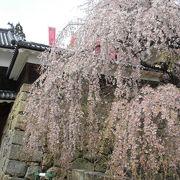 リベンジの「上田城千本桜まつり」