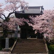 山門周りの桜が美しい