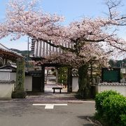 山門脇の桜が見事でした