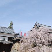 満開の桜がお濠の廻りに咲き乱れていました。