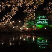 幻想的な夜桜が楽しめます。