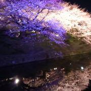 福岡のお花見名所