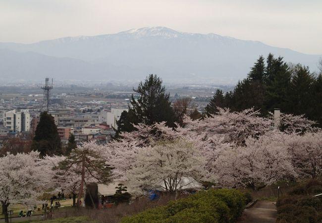 色々な桜が、一度に見られる珍しい公園