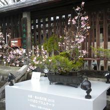 昼間の生け花(期間中昼夜展示されています)
