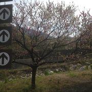 月川温泉郷の花桃まつり