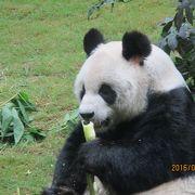 パンダが可愛い!一日遊べそうです。