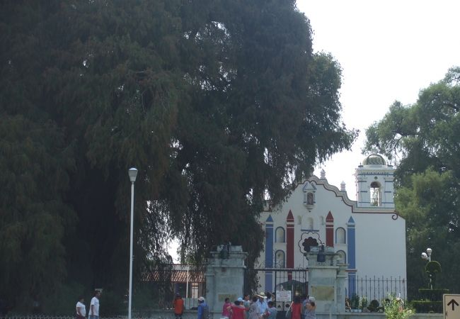 樹齢2000年とされる巨木