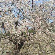 福岡屈指の桜の名所