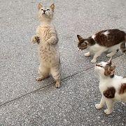 阿波連地区はネコがいっぱい