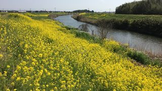 吉野ヶ里菜の花マーチ