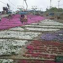 天空の花回廊 芝桜の丘