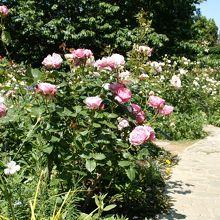 庭園内の散策路。