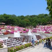 つつじ祭りの西山公園