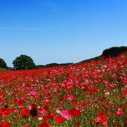 日本にもある♪天空の絶景☆青空に映える深紅の海