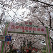思う存分桜を楽しめます