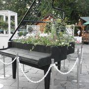 6月の大通り公園は、お花のお祭り