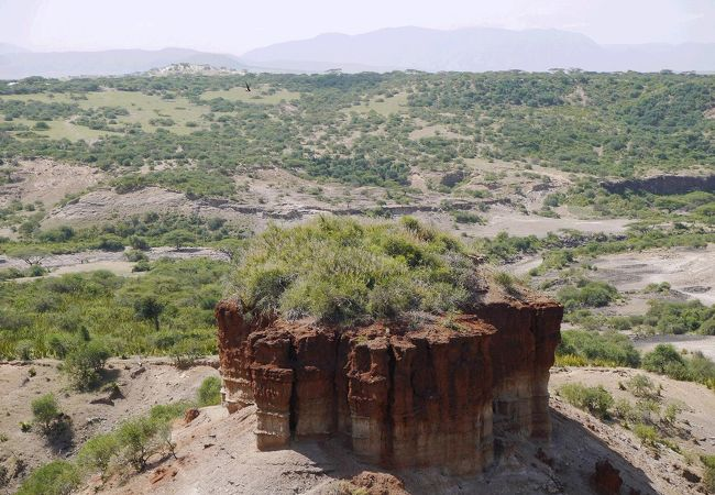ホモ・ハビリスの頭蓋骨が発見された渓谷