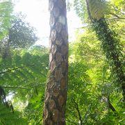 奄美の自然の豊かさを感じる原生林