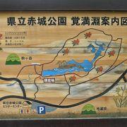 赤城山・覚満淵のレンゲツツジは今が見頃です。