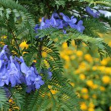 ラッパの形をした小さな青紫色の花です。