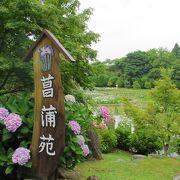 しょうぶまつりは残念ながら雨でしたが、菖蒲や紫陽花はしっとりしていました。