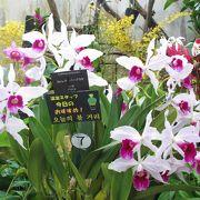 温室にはラン、サボテン、熱帯植物のカラフルな花が楽しめます。