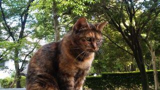 都会のオアシス東公園には猫ちゃんが