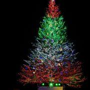 巨大なクリスマスツリーと地元の味を楽しもう