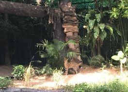 エスタテ カオ キアオ リゾート タイランド 写真