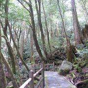体力や時間に合わせて屋久島の自然を体験できる